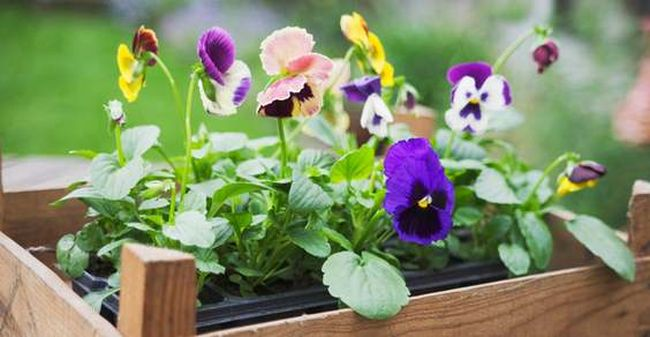 10 consigli per l 39 orto e il giardino in estate portalgasnext - Compost casalingo ...